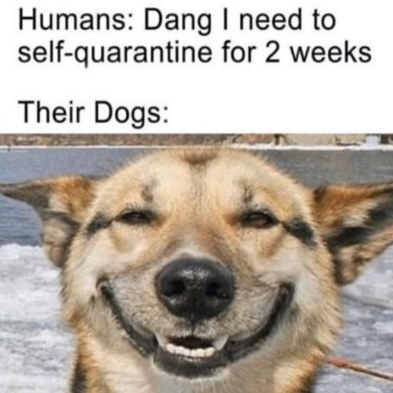 selfquarantine