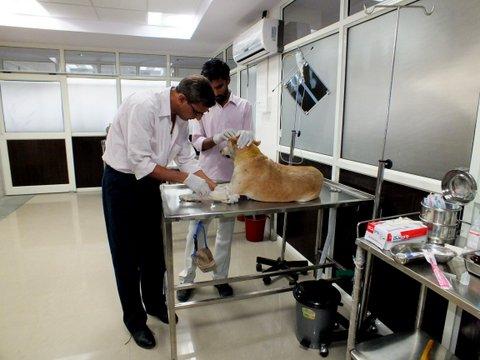 Prime Animal Care